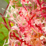 White, pink, and red brushstrokes on a green background