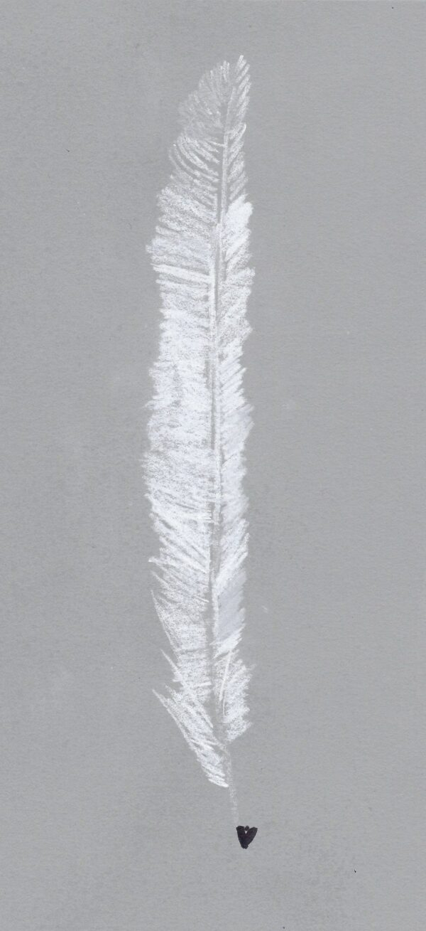 A pastel drawing of a white feather on grey paper.