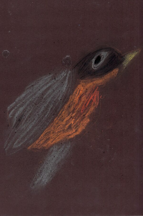A light pastel drawing of a robin in flight on a dark brown background.